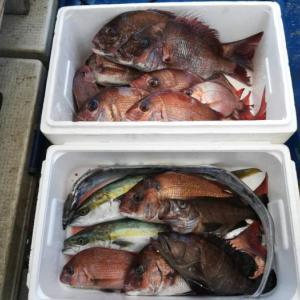 淡路島の船釣りでメバルサビキのはずが…マダイ!