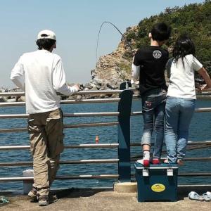 田ノ浦漁港でアジとイワシのサビキ釣り~豆アジ爆釣!!~
