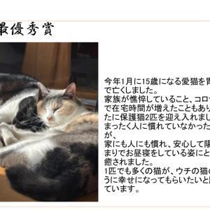 冬美ちゃん&コロちゃん幸せ報告 & 動物愛護週間