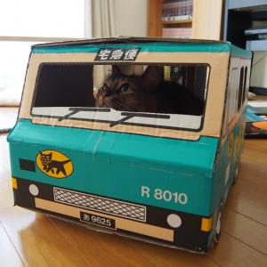 クロネコヤマトの段ボールでリアル「猫の宅急便」をやってみた