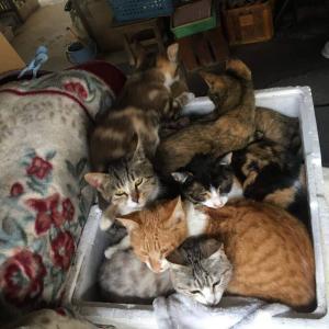 チャリティークッキー缶について(捨てられた6匹の子猫と3匹の成猫さん)