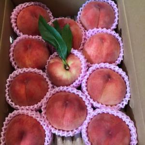 桃とお弁当