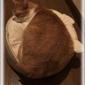 猫ベット物語 〜その1 惜しみなく与う〜