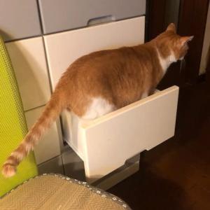 貴重な引き出しを猫に提供