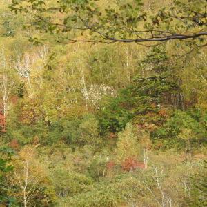 まあるい木落葉