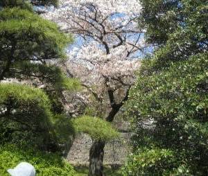旅の窓リバイバル1~2014年(平成26年)東京の桜