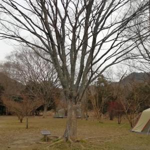 古法華自然公園キャンプ場で寒い中焚火キャンプ【4年目・4泊目】