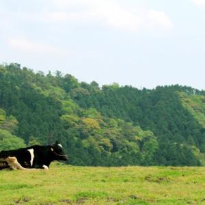 太陽牡牛座の季節。