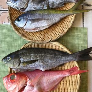 魚のお取り寄せ_6月  ♪金目鯛の湯引きと煮付け♪