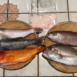 十一月の魚のお取り寄せ ♪天然鯛でお誕生日を祝う♪