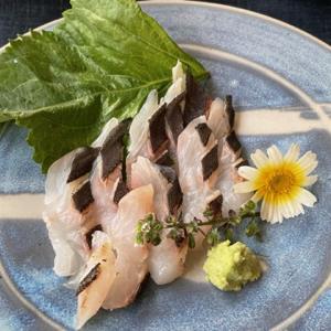 石鯛のお刺身・カルパッチョ・骨蒸し・お吸い物&昆布締めちらし