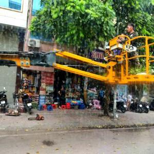【事故防止】ハノイでは街路樹の剪定が、慌ただしく行われています。