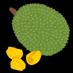 【南国フルーツ】ビニール手袋をしてジャックフルーツを食べました(;´Д`)