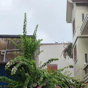 雨模様のハノイ。行きつけのビアホイは潰れ(?)悲しみの中で落花生を茹でる。
