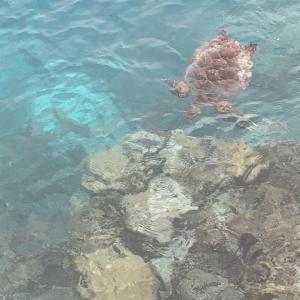 モルディブ・ローカル島子連れ旅のプロとのご対面