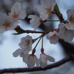 春っていいな~