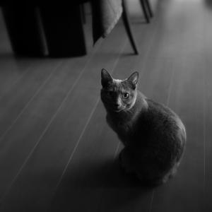 猫日記 健康診断