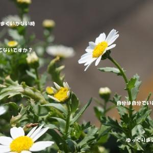 スタバ☆コーヒー ティラミス フラペチーノ&GW明けお仕事開始~