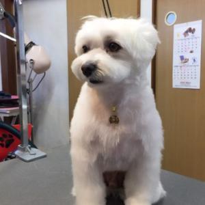 【日常】愛犬の日常