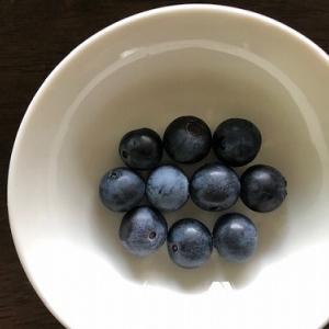 ブルーベリーの今季初収穫!