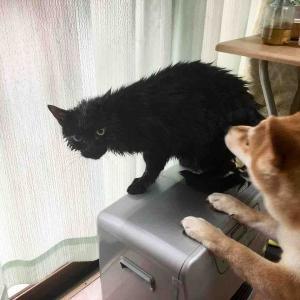 猫ちゃん達もスッキリ‼️