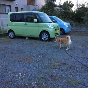 猫ちゃん発見❣️