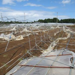 政務調査会「台風15号による被害地調査」