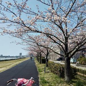 桜並木。。♡ ミニサイズの圧力鍋が仲間入り。。♪