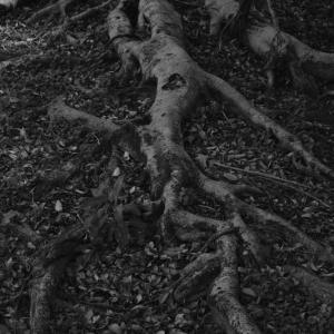 大地に根を張る