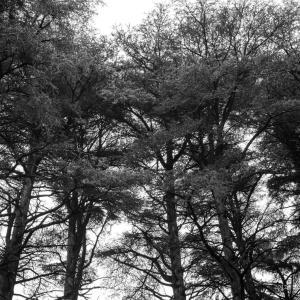 森林とマイナスイオン