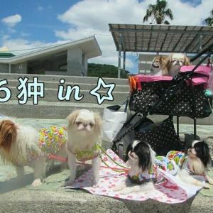 ♡6狆♡IN浪早ビーチ~(*´▽`*)・・・1ラブINハウスぅ~(-_-;)