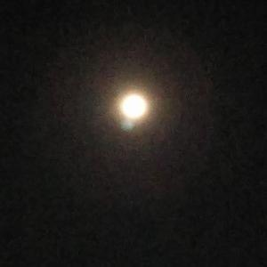 月明かりの中で