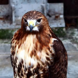 【掛川】見るも食うも描くもやっぱり鳥