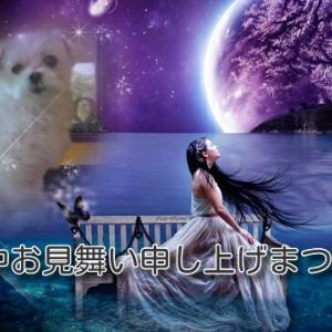 水瓶座満月&無料遠隔エンジェルヒーリング&大天使オラクルカード(ラギュエル)&わんこ店長・凜