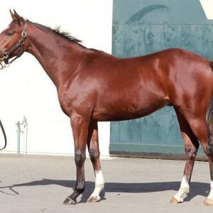 【ステラリード'18】雄大な馬体、威圧感ある歩き