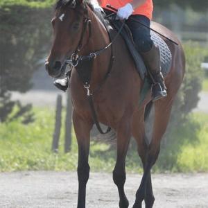 【リナーシェ】復帰戦は来週以降の馬の雰囲気で