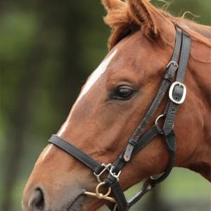 【アスカビレン'20】マイペースで要領が良い馬