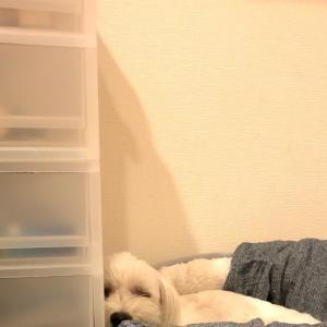 いまだ冬用ベッド