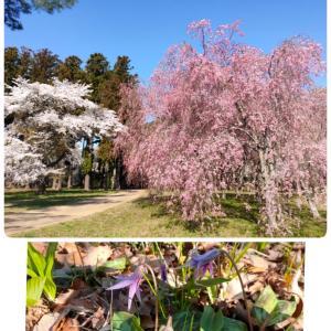 桜満開イースターを楽しもう♪