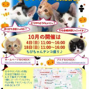 10月4日(日)はねこちゃんの譲渡会IN谷根千「まいの間」を開催します♪
