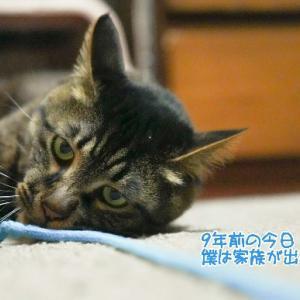 ☆虎太郎9回目うちの子記念日&ブログ4周年☆
