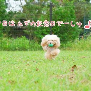 ☆小麦7回目うちの子記念日☆