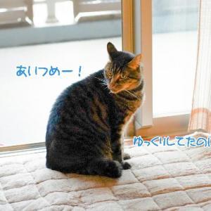 軽井沢タリアセン~可愛いがいっぱい~