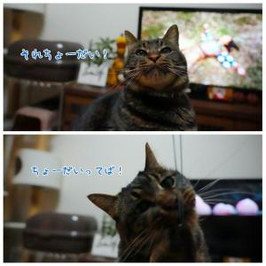 連休最終日のお話