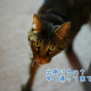 軽井沢ベジビエで待ち合わせ♪