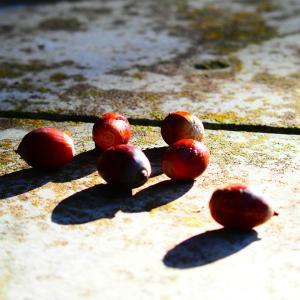 ❶これぞハイキング!東海自然歩道と寂光院の紅葉を楽しむ