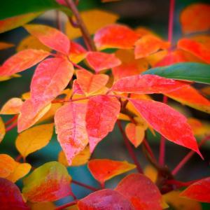 ❹これぞハイキング!東海自然歩道と寂光院の紅葉を楽しむ