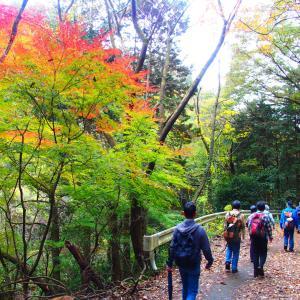 ❺これぞハイキング!東海自然歩道と寂光院の紅葉を楽しむ
