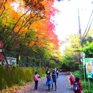 ❻これぞハイキング!東海自然歩道と寂光院の紅葉を楽しむ