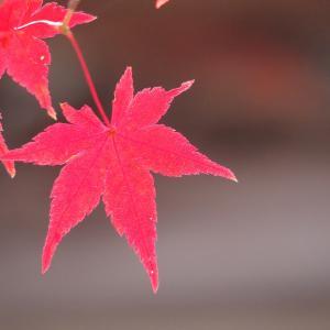 ❽これぞハイキング!東海自然歩道と寂光院の紅葉を楽しむ